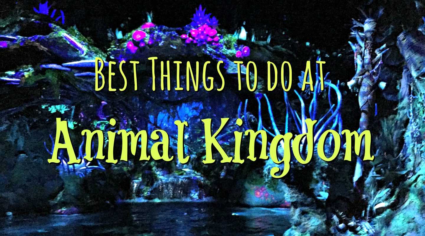 Best Things to do at Animal Kingdom